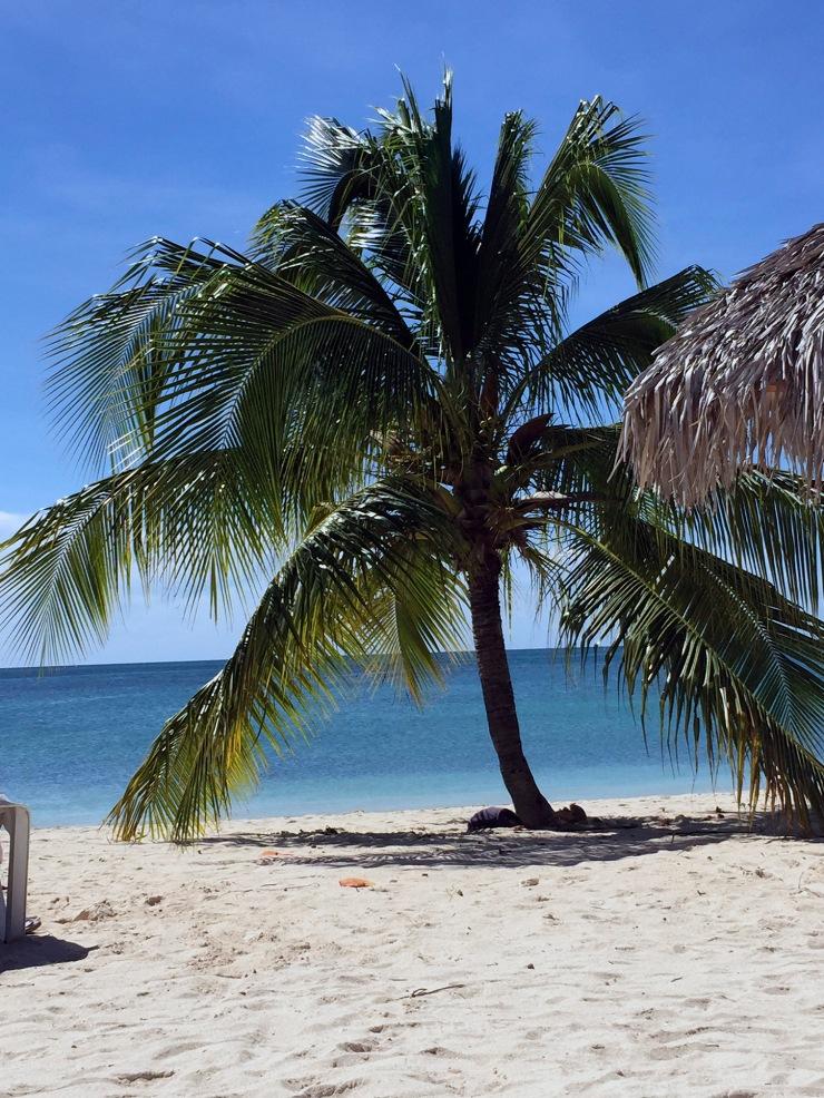 palm, palm tree, palmu